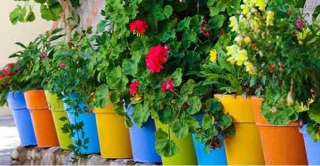 النبات المنزلي