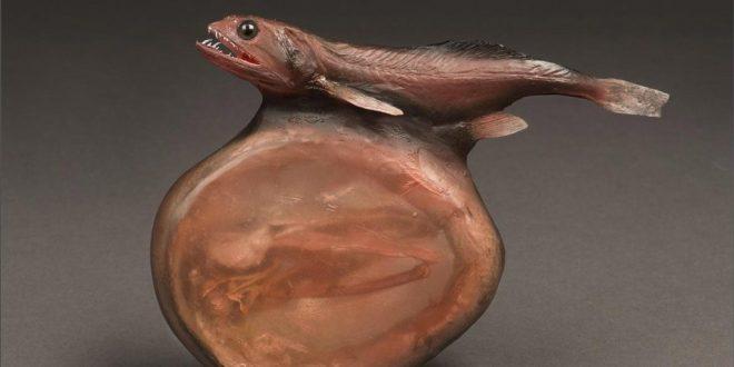اخطر سمك في العالم