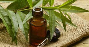 اهمية زيت شجرة الشاي لتعزيز نمو الشعر