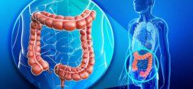 العلاقة بين تطهير القولون من السموم وبين تخفيف الوزن