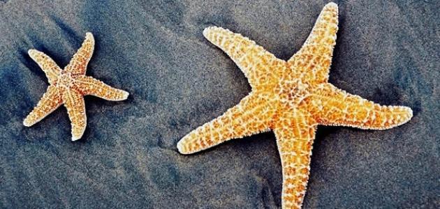 اهمية نجمة البحر